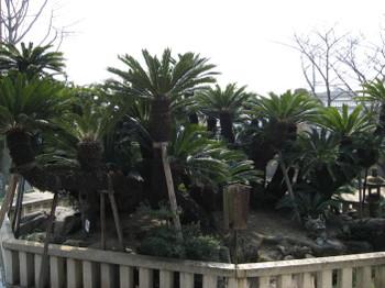 堺市 妙国寺、南宗寺を訪ねて ...
